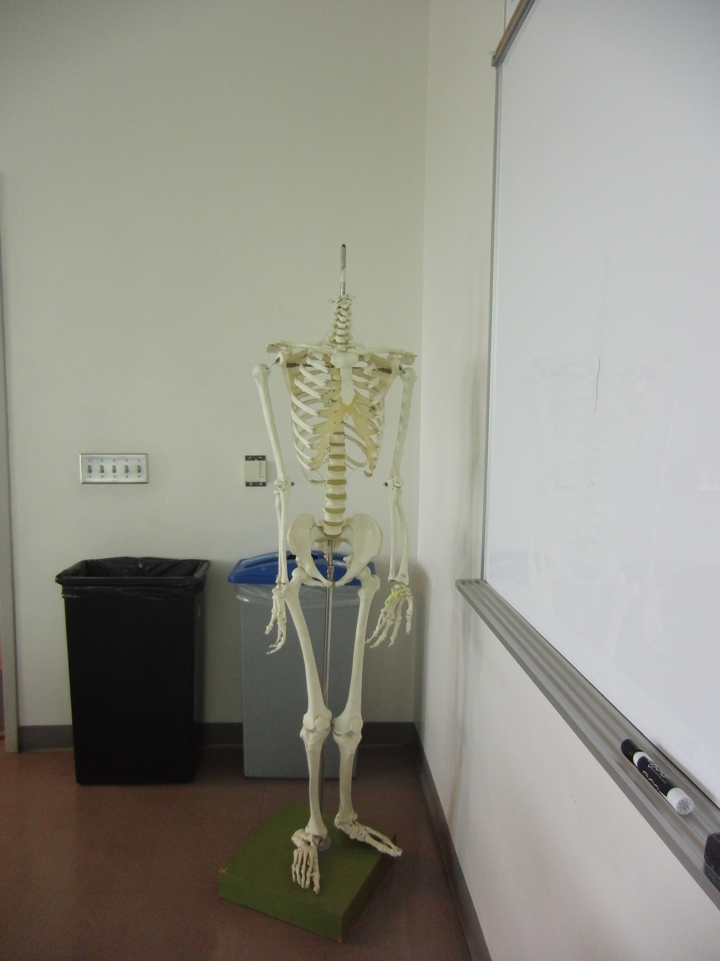 Photo of the skeleton in the room